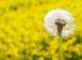 128889985-alergia-dmuchawiec-2.jpg